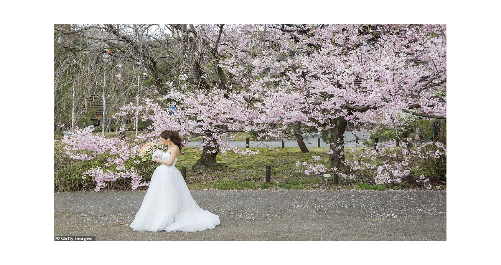 Japan's Famous Cherry Blossom Blooms Earlier Than Any Year Since First Records Began In 812 AD