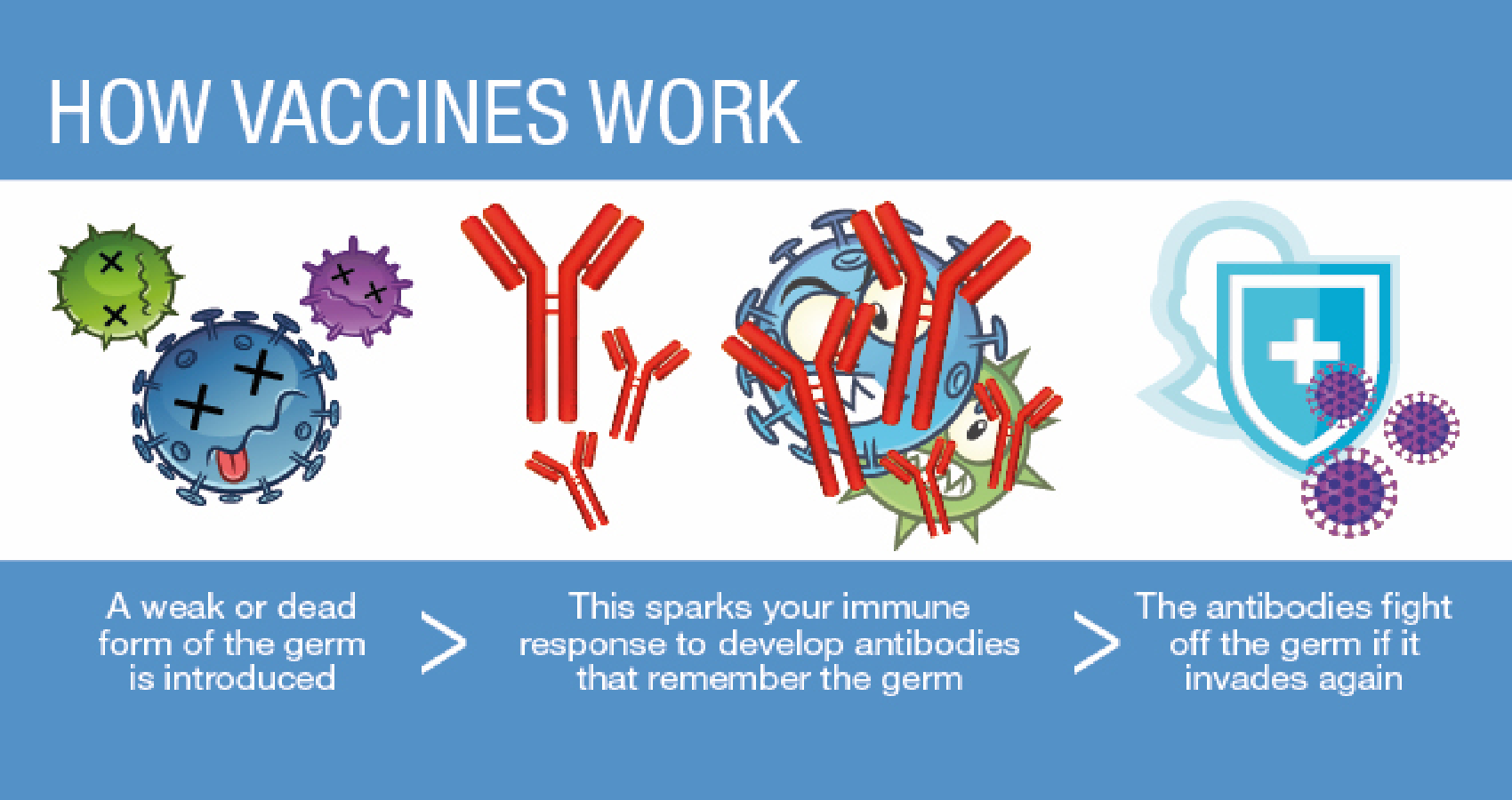 We Know More As To How The Vaccines Work