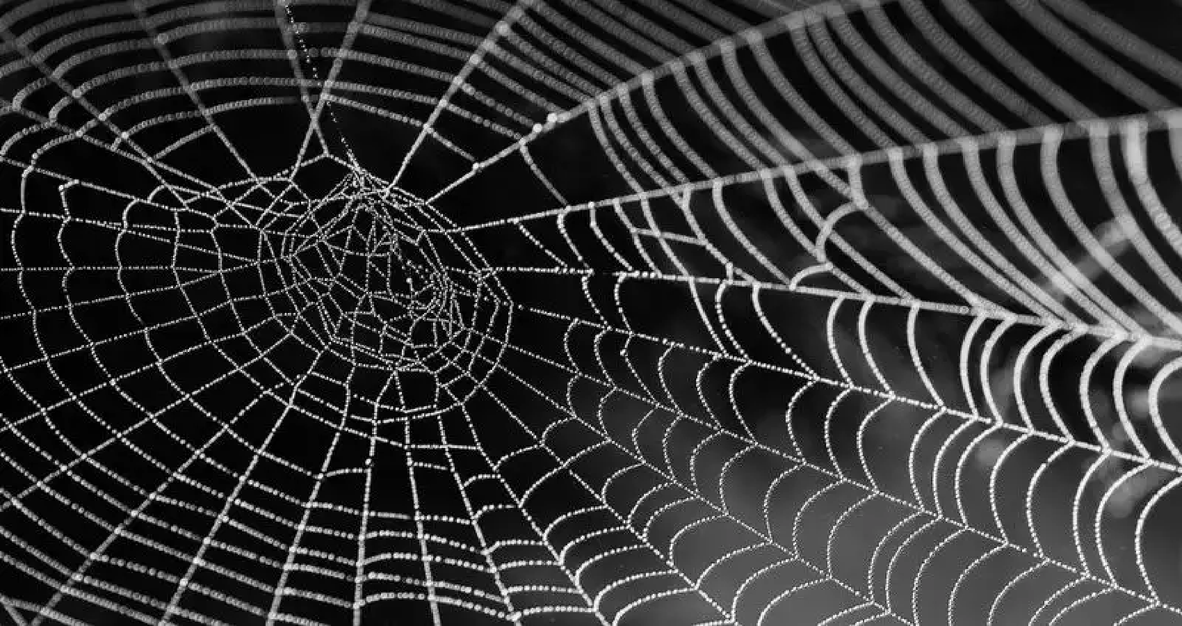 MIT Scientists Study Spider Web Structure By Translating It Into Music