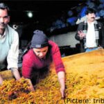 Panipat: The Indian City for Pickles