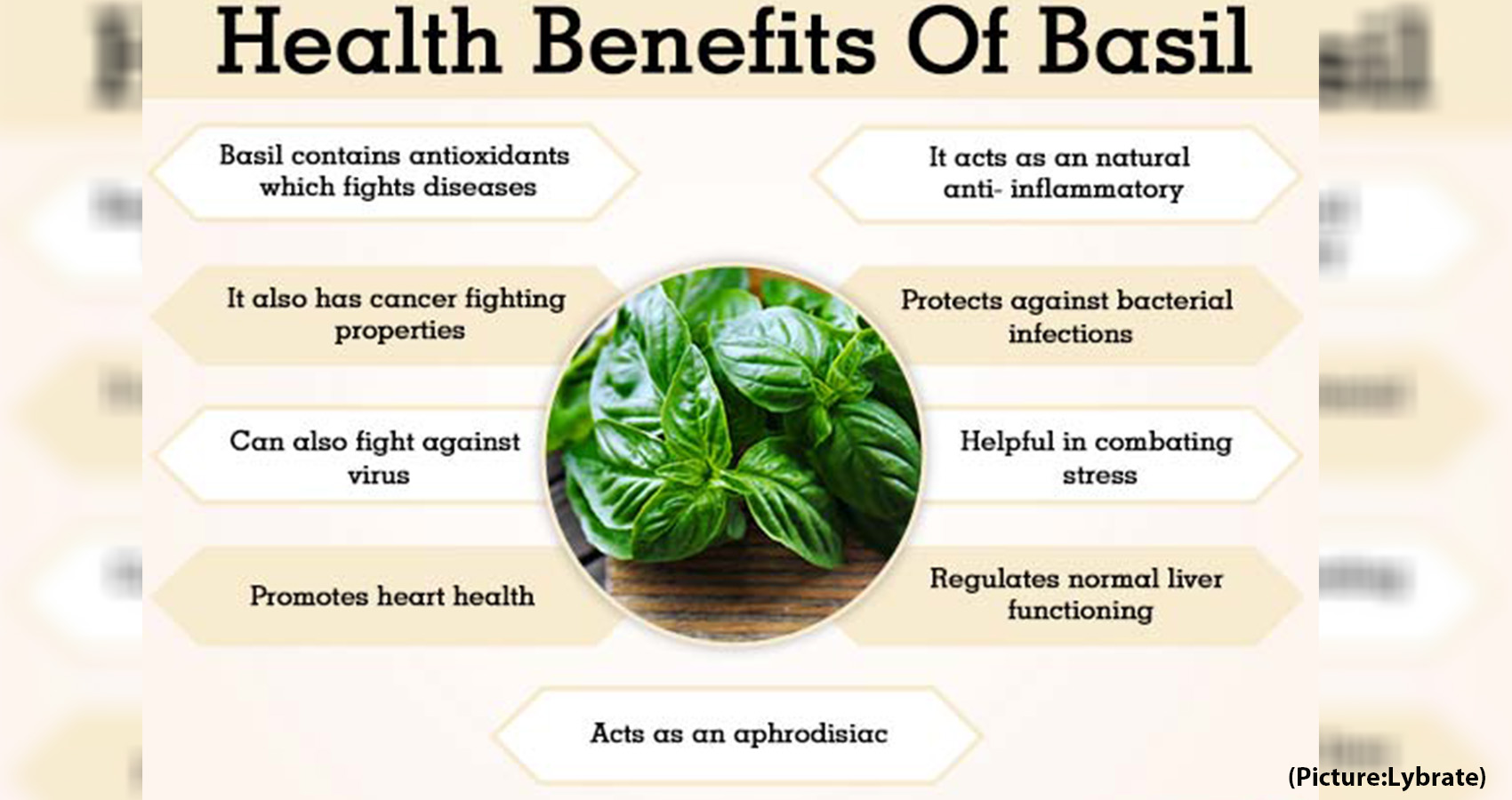 Enormous Benefits Of Basil