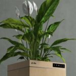 Students From India Develop Plant-Based Air Purifier